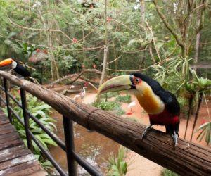 atracao_1_img4_viveiro-pantanal2-custom